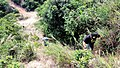 虎门皇帝山20130519 - panoramio (8).jpg