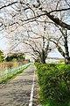 豊田市(水源公園) - panoramio.jpg