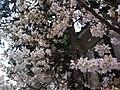 香川県善通寺市善通寺 - panoramio (11).jpg