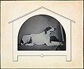 -Dog- MET DP233970.jpg