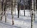 - panoramio (919).jpg