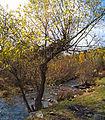 0165 - Nordkorea 2015 - Sinhuangsan - Fluss aus Stein (22343111894).jpg