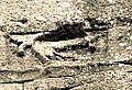 01 Lièvre du Pont-du-Gard.jpg