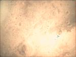 09-349.56.02 VMC Img No 25 (8269431974).png