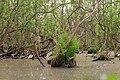 15-05-09-Biosphärenreservat-Schorfheide-Chorin-Totalreservat-Plagefenn-DSCF5574-RalfR.jpg