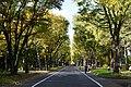 151010 Hokkaido University Japan07s3.jpg