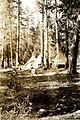 1922. Wash on the line. Insect control Camp 33. Southern Oregon Northern California (SONC) beetle control project. (33451137012).jpg