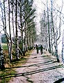 19880215081NR Hänichen (Bannewitz) Windbergbahndamm.jpg