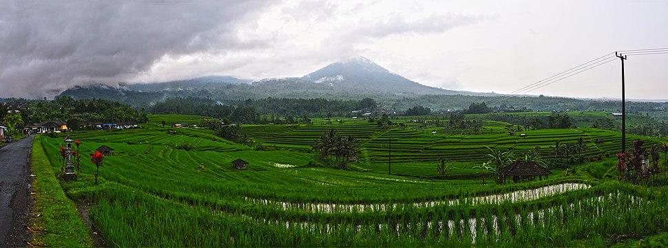 1 bali jatiluwih rice terrace panorama