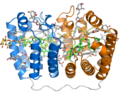 1ppr peridinin chlorophyll protein.png