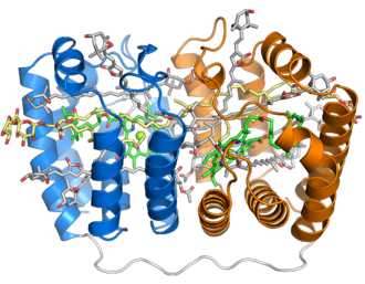 Peridinin - Image: 1ppr peridinin chlorophyll protein