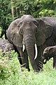 20090507-TZ-NGO Safari 348 (4678041952).jpg