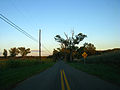 2009 10 07 - 0069 - Beltsville - BARC (3994558186).jpg