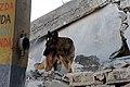 2010년 중앙119구조단 아이티 지진 국제출동100118 세인트제라드 지역 수색활동 (60).jpg