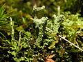 2012-12-31 15-21-40-lichens.jpg