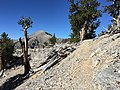 2015-07-13 09 15 40 View southwest along the North Loop Trail towards Charleston Peak about 7.3 miles west of the trailhead in the Mount Charleston Wilderness, Nevada.jpg