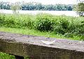 2015 05 24 Deutschland Baden-Württemberg Landkreis Sigmaringen Naturschutzgebiet Zielfinger Vogelsee (21).jpg