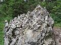 2017-07-22 (11) Lechnergraben at Dürrenstein (Ybbstaler Alpen).jpg