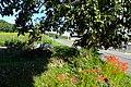 2017-09-26 Wakikawa-san Kyokaiji temple(脇川山教海寺)兵庫県三木市細川町脇川 DSCF1916.jpg