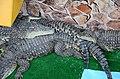 2019. Крокодиловый каньон в Ейске 005.jpg