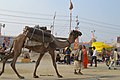 2019 Jan 16 - Prayagraj Kumbh Mela - Carrying Wood Via Camel.jpg