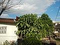 2089Santa Cruz Paombong, Bulacan River Districts 23.jpg