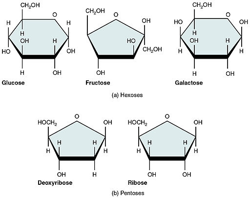 217 Five Important Monosaccharides-01