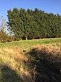 3726 Waterskiplas Westpark.DeHeld.RoegeBos.Gravenburg Vinkhuizen Schapen Dijk.jpg