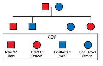 Mendelian traits in humans - A 50/50 chance of inheritance.