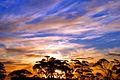 A208, Norseman, Western Australia, Eucalyptus at sunset, 2007.JPG