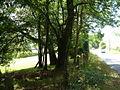 A381 near Higher Fallapit Farm - geograph.org.uk - 227280.jpg