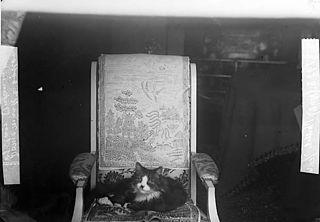 A cat (L Davies)