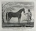 A groom holding a stallion by its reins. Etching by R. Parr Wellcome V0021758.jpg