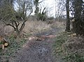 A muddy trail - geograph.org.uk - 745094.jpg