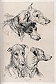 A pair of dogs; two studies of their heads. Etching after E. Wellcome V0023224.jpg