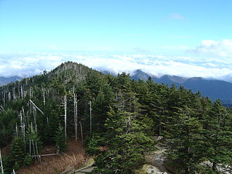 Black Mountains (North Carolina) - Spruce-fir stand on Mt. Mitchell
