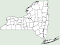 Achillea distans NY-dist-map.png