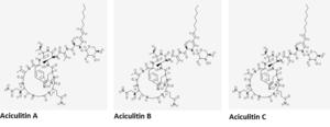 Aciculitin - Aciculitins A-C