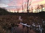 Acton mass wetlands.jpg