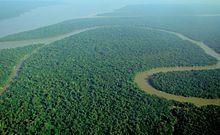 Vista aerea di uno scorcio della foresta amazzonica