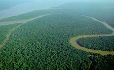 Aerial view of the Amazon Rainforest.jpg