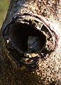 African Squirrel.jpg
