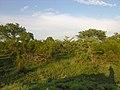 African bush (393913174).jpg