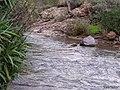 Agua en curso - panoramio.jpg