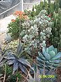 Aloes and Agaves (3425021818).jpg