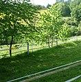 Am Weg zum Freudenbergerhof - panoramio.jpg