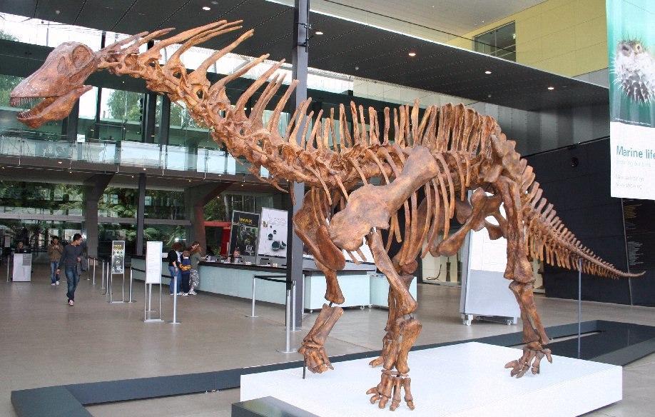 Amargasaurus1 Melb Museum email