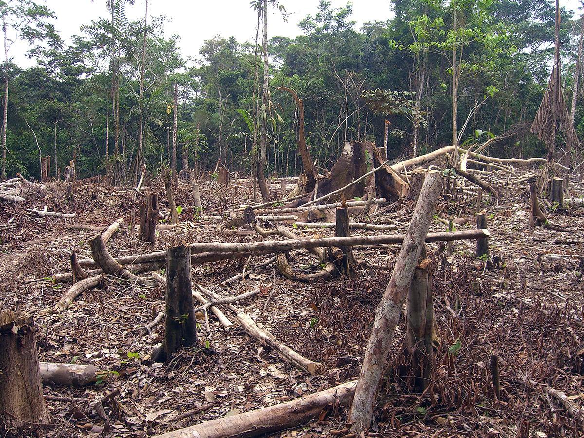 Deforestacin en Colombia  Wikipedia la enciclopedia libre