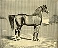 American horses and horse breeding - a complete history of the horse from the remotest period in his history to date. The horseman's encyclopedia and standard authority on horses, embracing breeds, (14598235690).jpg