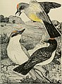 American ornithology, for home and school (1906) (14748439714).jpg